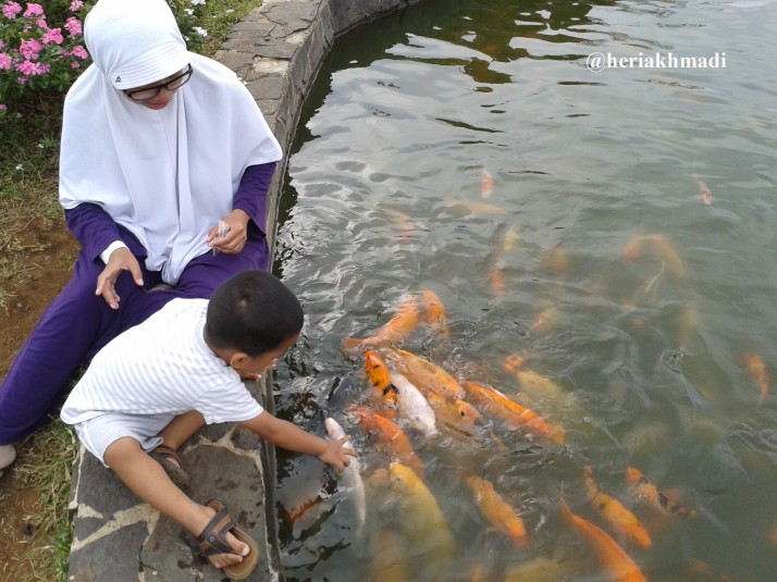 foto kasih makan ikan.jpg